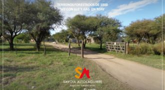VENDE: TERRENOS FORESTADOS DE 1000M2 C/GAS ZONA CLUB DE CAZA TOAY